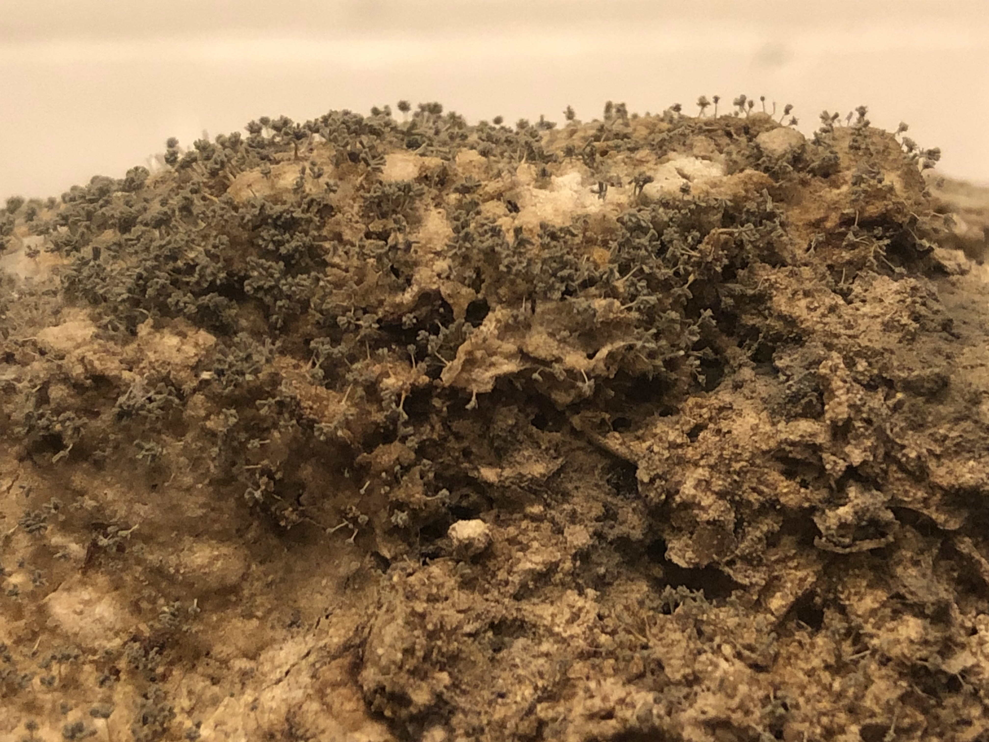 Toxic fatberg in museum quarantrine - watch it here